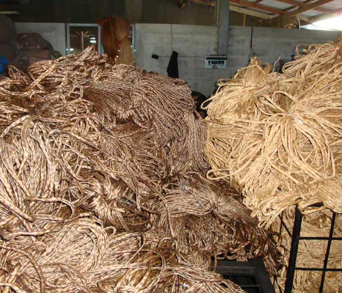 The bundles of dried Water Hyacinth are prepared ...