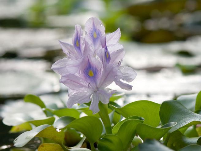 Water Hyacinth Furniture