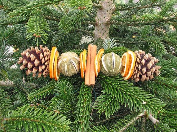 The Christmas trees needles contain loads of Vitamin C