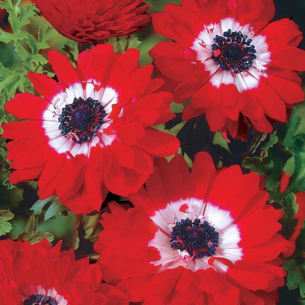 Garden Furniture Centre Ltd & 5 of the Best Shade Loving Plants ...
