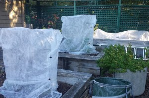How to wind proof your garden - plant covers