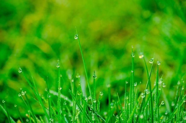 Best Plants For Moist Soil