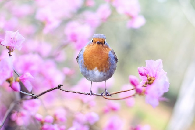 How To Brighten Up Your Garden For Spring
