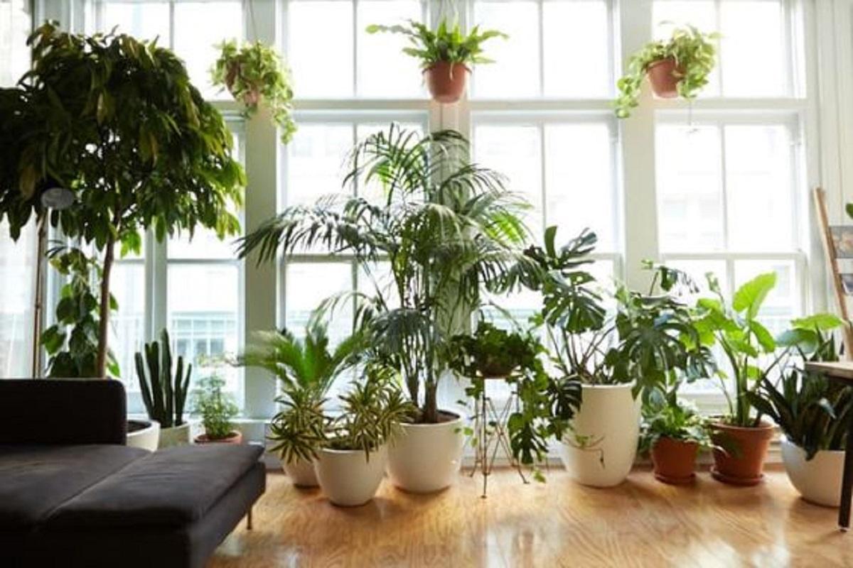 Top 10 Houseplants For Beginners