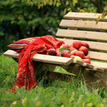 The Lilly Bench in an orchard setting with freshly picked apples