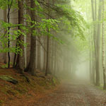 A misty oak furniture
