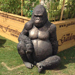 The Gorilla always guards the Trade Stand for us