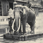 The White Elephant is iconic in Thailand