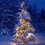 Small Teak Christmas Tree